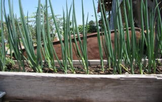 Heritage Salvage commercial residential landscaping 21